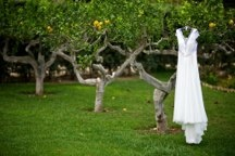 The Wedding Dress / Elegant wedding dresses, bridesmaid dresses, wedding guest attire and plenty more!