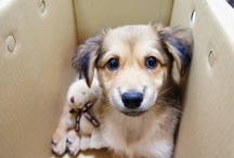 Pinning for Pets / by Nancy Parker