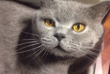cat fedor / cat pet
