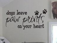 Viniles para perros