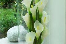 particolari di fiori
