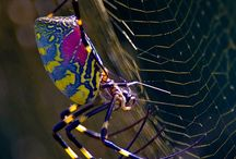Insects up close / by MOSI Tampa