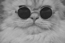 Кошачесть / о котах и кошках
