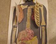 Grade 5 Body Systems