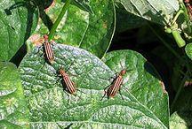 Gardening - Pests and Disease