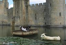 Goats in boats