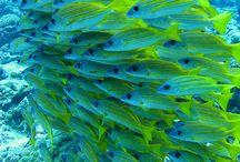 Peixes,golfinhos,vida aquatiça...