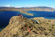 Komodo Flores / Find information all about Flores NTT Indonesia