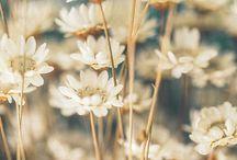 Fleurs / by Renée