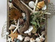 Frame with sea shells like Claudettes