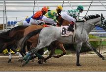 My obsession.......horse racing....horses...... / Horse racing  / by Elaine Kucharski