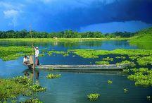 Assam Delights