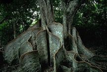 Every tree has its own personality / by Emily Morson