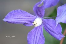 purple flower photography