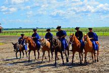 Hungary's Horsemen of the Puszta