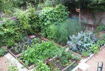 Køkkenhave_drivhus