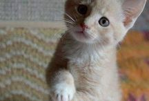 Cats & Kittens / photos of #cats and #kittens