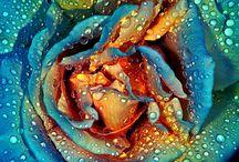 Flowers / by Chantal Grech