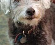 puppy love / Canine devotion, doggie delights, puppy promises / by Regina Vella