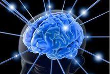 Alimentos para nuestro cerebro