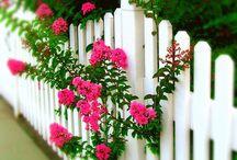 bílý plaňkový plot