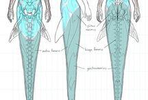 Fantasy anatomy