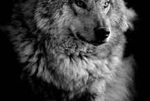 Wolfes