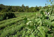Permaculture pilgrimage - Zaytuna farm