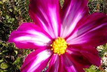 dabit / été florale
