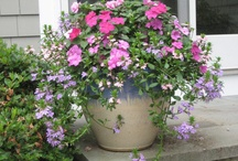 Gardening ideas / by Dean Trout