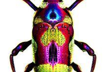 buggy bugs