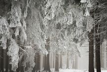 Seasons / Living in New England.. so much to love about each of the four seasons...