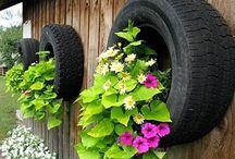 planta no pneu