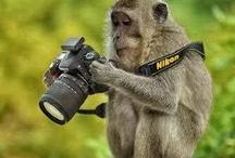 gorilla ja apina