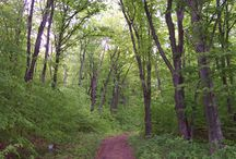 North Manitou Island / Get away from it all and get back to nature on North Manitou Island! The vast majority of the island is managed as a wilderness area, providing you with the opportunity to experience solitude and practice self-reliance.  North Manitou also had a colorful and interesting history, and today you can discover this hidden history on your wilderness adventures. / by Sleeping Bear Dunes National Lakeshore