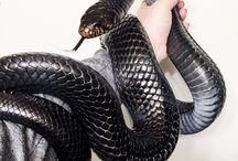 [ animals | Snakes ]