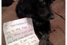 Dog Shaming / This is not a hate board of any kind, it's a funny. Just look and see