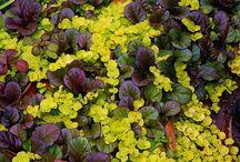 Väriä puutarhaan