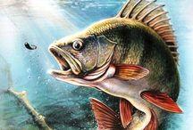 Fisk til inspiration
