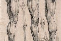 musculos miembros inferiores