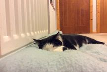 Scamp_The_Cat / A lovely photo of scamp