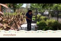 Adoptable Pet Videos! / Come see our adorable and adoptable pets at Humane Society Silicon Valley.