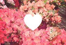 like / love / by Monarose Ryan