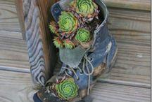 gardening / by Kayla Lane Smith