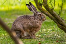 Borgo's Animals best foto / Borgo Grondaie is an #hotel close to #Siena but dipped in nature. Our #gardens are reach in mediterranean vegetation such as Olive Trees, Strawberry trees, Cypresses, pommygranes, thyme, rosemary and sage. It 's easy to see #wildanimals too, such as deers, birds and hares.