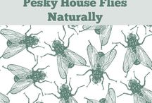 Household - Pest solutions