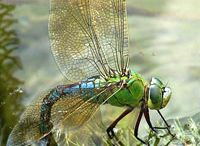 DrAgOn flies / by Suzaun Shell