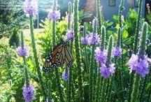 Butterflies in Toronto