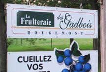 La Fruiteraie des Gadbois / La Fruiteraie des Gabdois, bleuetière et verger, vous invite à venir cueillir vos fruits (bleuets et pommes) à même la montagne de Rougemont sur un site calme et bien entretenu. Des bleuets cultivés savoureux, sucrés et abondants ainsi que des pommes juteuses, d'une qualité exceptionnelle, vous seront offerts.