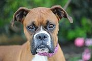 Adoptable Animals and Pets / Cuddly creatures from Buckaroo's Animals & Pets category / by Buckaroo.com
